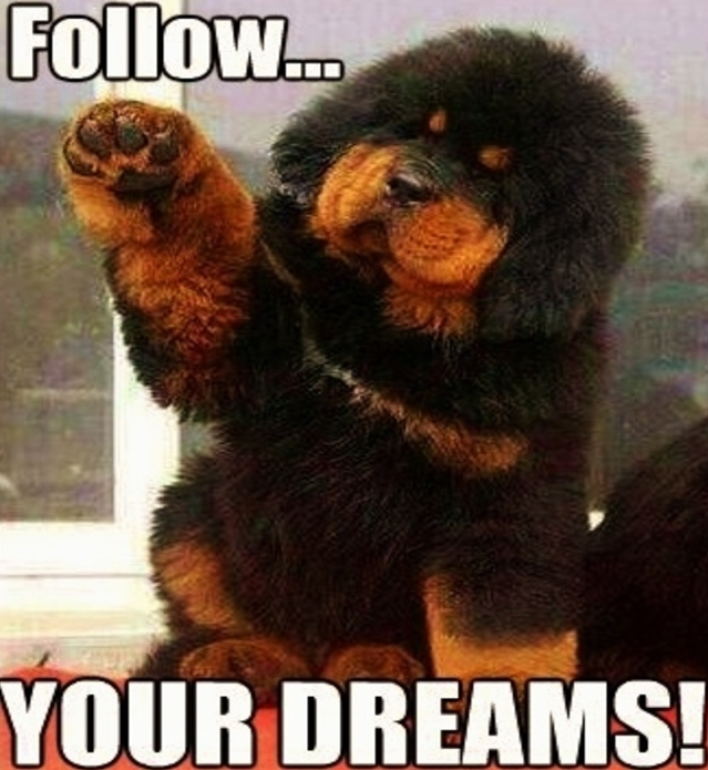 follow-your-dreams-dog